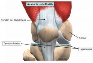 tendon rotuliano - tendinitis rotuliana